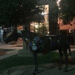 Photo de Painted Pony
