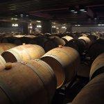 Wine cellar in basement