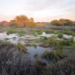 Wetlands at dawn
