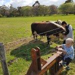 Foto Greenfield Farmstay
