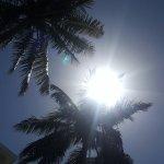 Foto de Florida Dolphin Tours