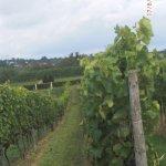 Rheinhessen, größes Weinbaugebiet in Deutschland!