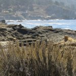 little farther south @ point Lobos