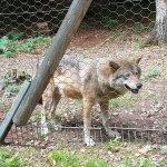 Wolfspark Werner Freund Foto