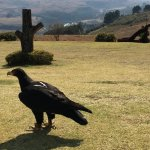 Foto de Falcon Ridge Bird of Prey Centre