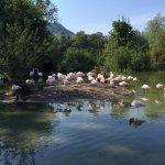 Tierpark Dählhölzli Foto