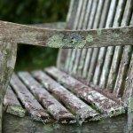 Photo of Meadowlark Botanical Garden