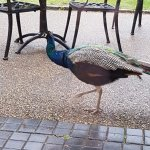 Foto de Luton Hoo Hotel Golf and Spa