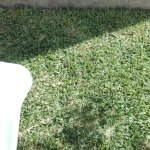 IMG_20160819_095119_large.jpg