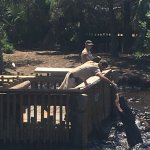 Photo de St. Augustine Alligator Farm Zoological Park