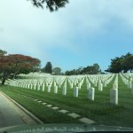 Rows of grave stones
