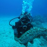Pacific Divers Foto