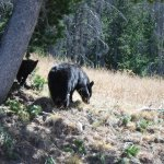 Foto de ClubHouse Inn West Yellowstone