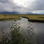 Potter Marsh Bird Sanctuary Foto