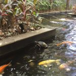 Spacious clean pool and wunderbar little and big turtle in the fish pond !
