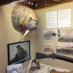 Photo de Musée polaire (Polarmuseet)