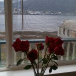Fresh roses in our room