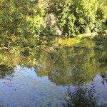 Les arbres qui se regardent dans la rivière au matin