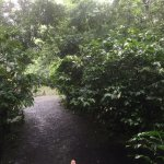 Foto de Tree Houses Hotel Costa Rica