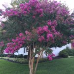 Beautiful flowers and gardens around Wyndham Virginia Crossings