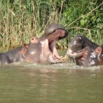 Heritage Day Tours & Safaris Foto