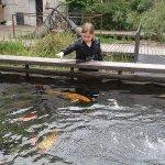 les poissons que l'on peu caresser