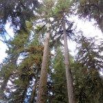 Lots of tree shade
