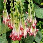 Mendocino Coast Botanical Gardens Foto