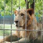 Photo de Samui Aquarium and Tiger Zoo