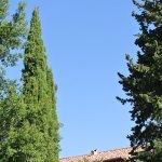 Les cypres et le ciel tjs bleu