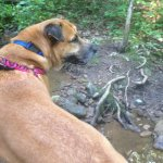 The dog at her favorite creek.