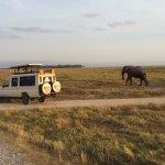 A Trusted Tour Operator -- KITS in Amboseli & free roaming elephant
