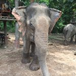 Elephant Village Sanctuary Day Trips Foto