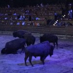 Loved the buffalo act-- very moving..
