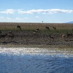 A herd of deer on one of the islands
