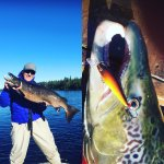 Salmon Finland Kalastusmatkat