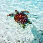 Photo de Bora Bora Lagoonarium
