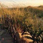 Photo de Ponquogue Beach