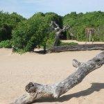 Jungle Beach Resort Foto