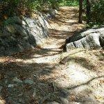 Cyrus McCormick nature trail