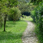 Path to owner's house