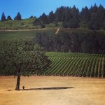 View from Stoller Vineyards.