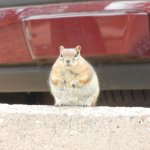 We named this guy Sumo Squirrel because he was already SO fat.