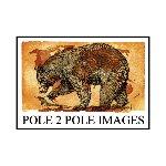 Pole2Pole_Images
