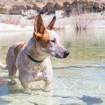 Pet-friendly shores across the lake!
