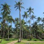 Foto de Ocean Paradise Resort & Spa
