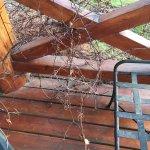 Maleza en el balcón de la habiatción