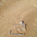 each tide plastic bags wash ashore