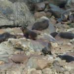 Photo de Ohau Waterfall Walk and Seal Pups