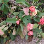 Foto de Xiamen Botanical Garden